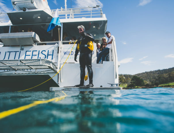 Diver ready to catch sea urchins in Tasmania